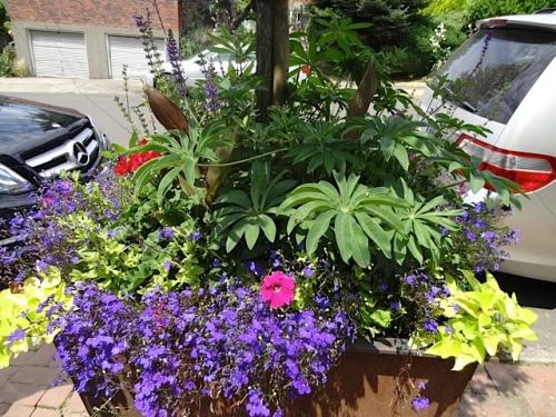 planter3