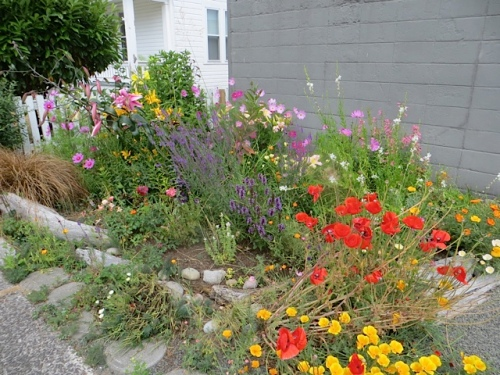 Ilwaco post office garden, on our way to work.