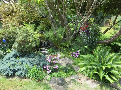 the pond garden at KBC, our favourite job