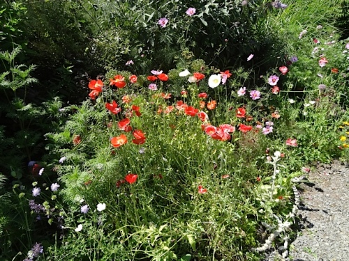 Marilyn;s daughter Nancy tells me they are loving the poppies this year.