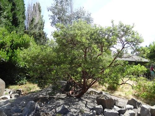 rockerytree