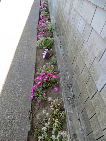 Good for Scoopers Ice Cream for weeding and planting against their building.