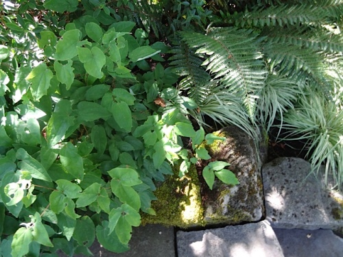 now: mature stairway plantings in shade