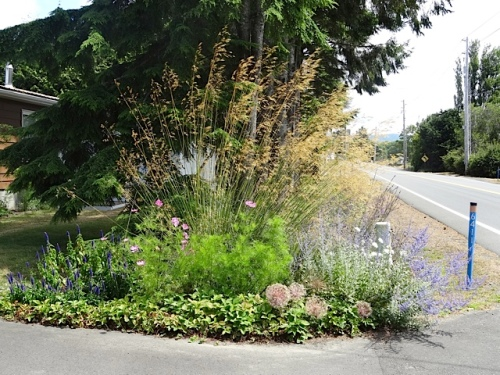 Diane and Larry's driveway garden