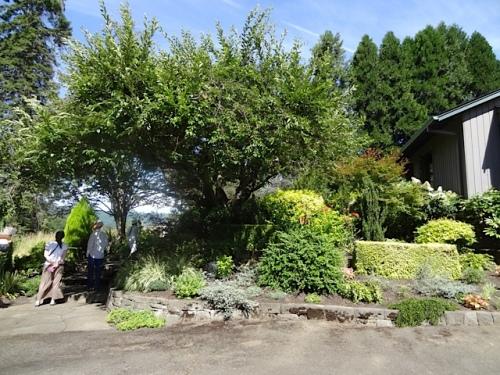 terraced garden below the house