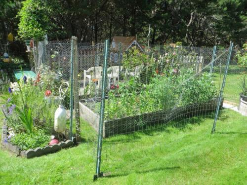 veg patch, July 3rd