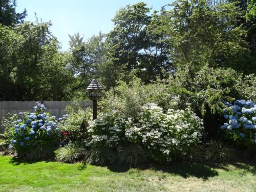 west garden bed