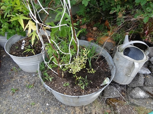 "was flummoxed where to put this ""wire bush"" so it went in the center of a pot."