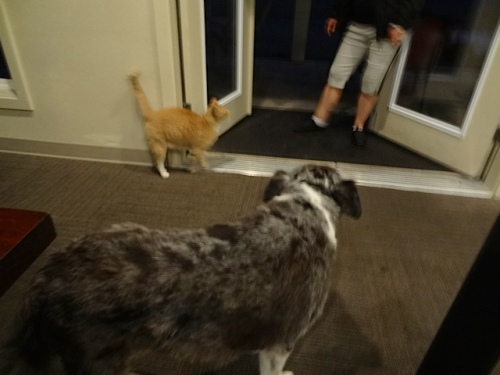 After closing time, Lacy and Parking Lot Cat came to say hello.