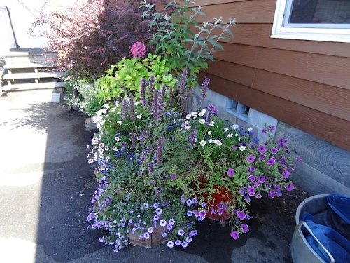 containers in back yard