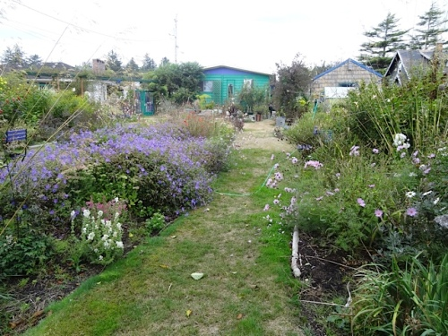 the back garden from the fire area