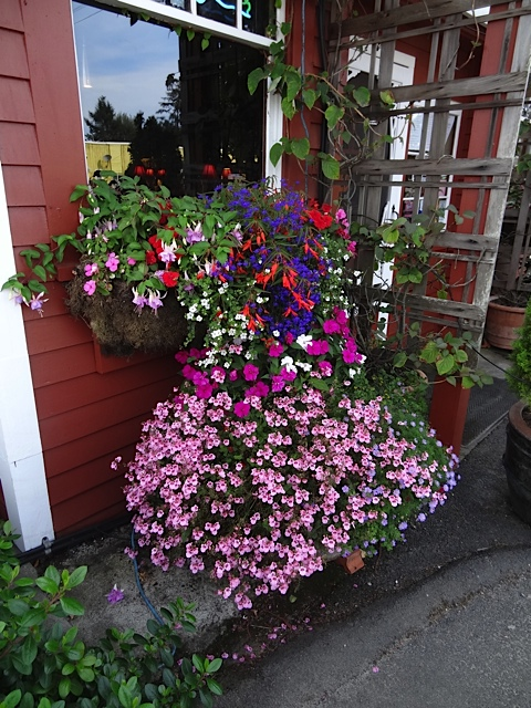 north wall planting by Nancy Aust of The Basket Case