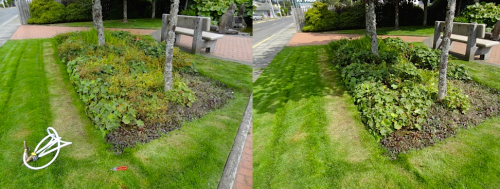 before and after, southeast quadrant of park
