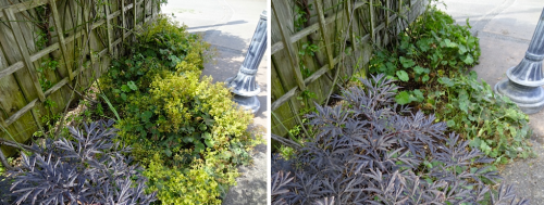 before and after, southwest quadrant, with Sambucus 'Black Lace'