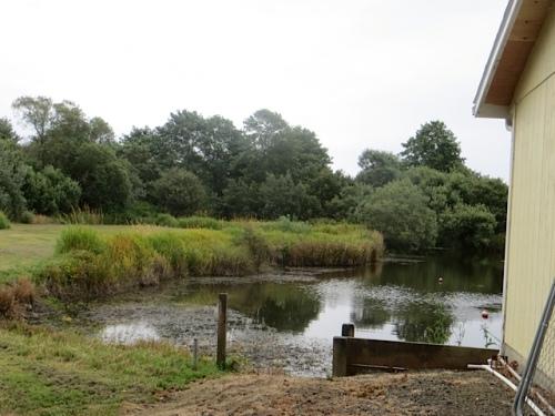 a pond next door