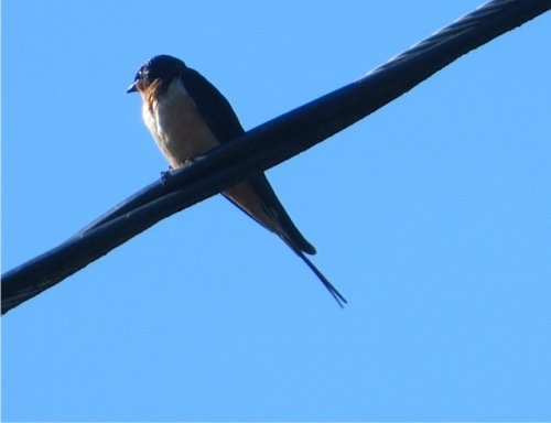bird on a wire while we dumped our debris at city works