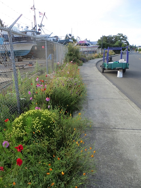 boatyard garden, looking north from the gate