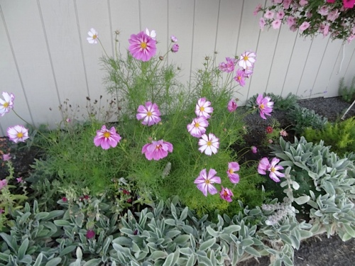 Cosmos, south side of port office