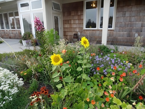 Sondra's garden at The Cove
