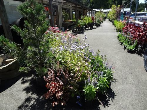 front display at Planter Box; still lots of good plants for sale.