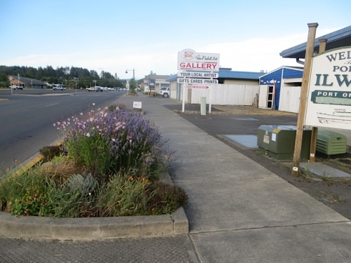 thriving gardens by Nisbett Gallery and Port office, thanks to Don's extra watering.