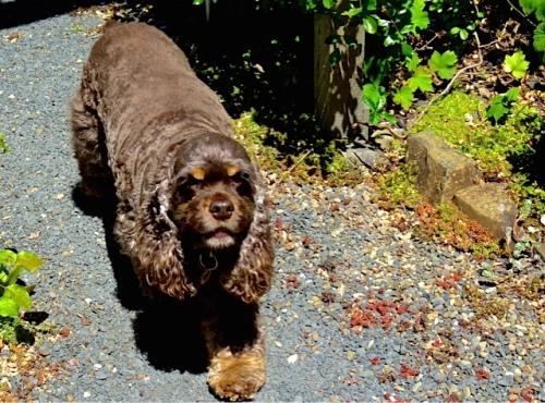 Allan's photo: Sami's dog