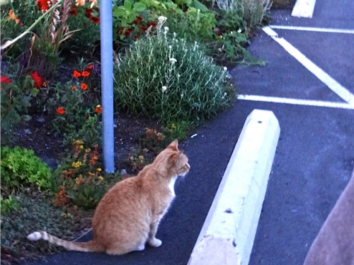 PLC (Parking Lot Cat)