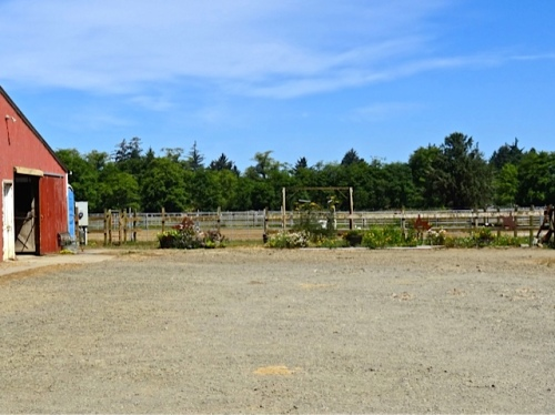 The Red Barn garden from across the parking lot (looking north)
