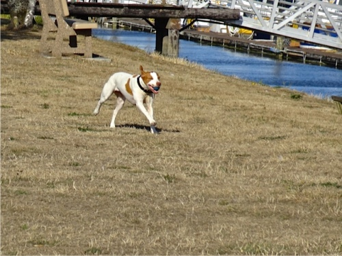 Allan's photo: a happy dog at the port