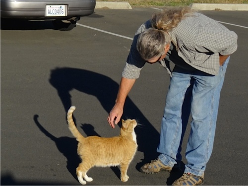 Dave and Parking Lot Cat