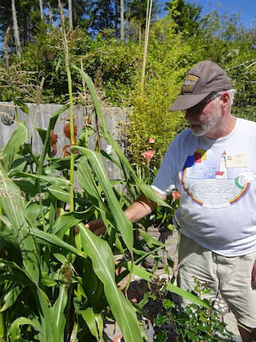corn producing in a big container; Ed said he would harvest some for dinner, after the tour.