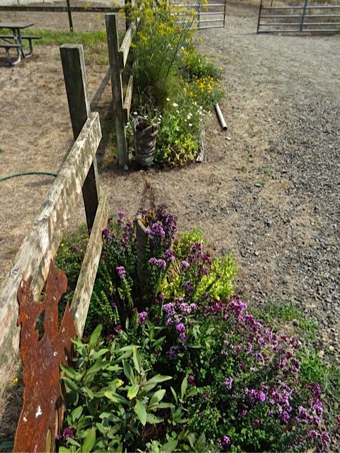 Allan's photo: This garden is pretty dry and gets a lot of north wind.