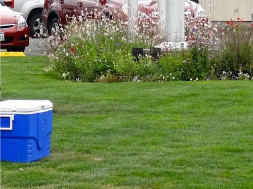 a picnic cooler at Veterans Field, Allan's photo