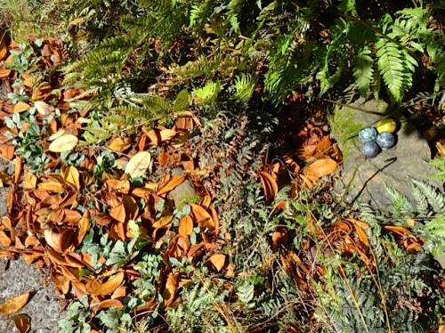 Allan's photo: leaves smothering some delicate plants