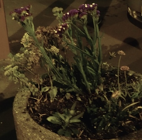 Allan's photo: the statice might be too brittle.  It is a temporary centerpiece.