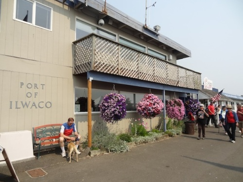 our garden at the Port Office, with the hanging baskets from Basket Case Greenhouse