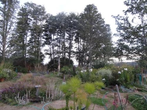 evening back garden