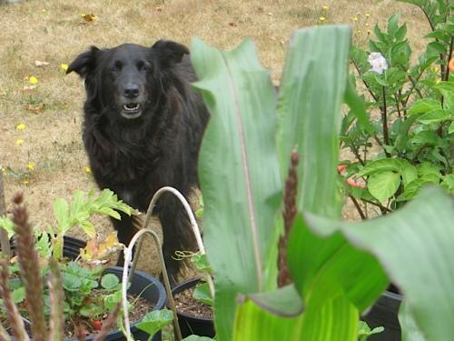 and her darling dog, Ella