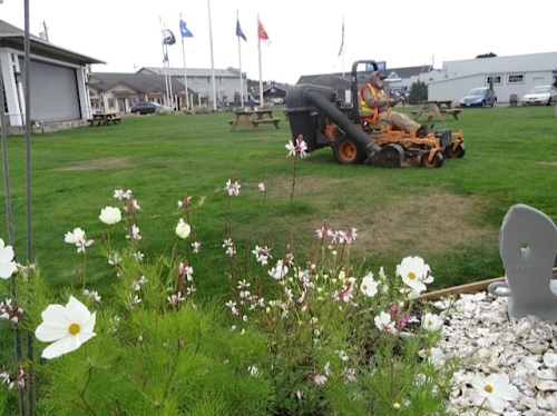 Veterans Field: deadheading while the lawn gets mowed