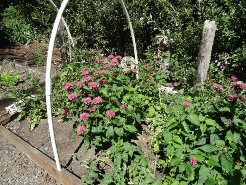 Flowers to attract pollinators are interspersed with fruit and vegetables.