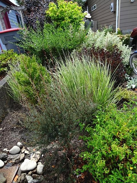 front corner of the garden