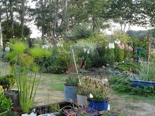evening light on the back garden