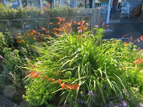 Two big daylilies AND this orange montbretia that snuck in MUST go this fall.