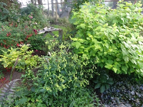 Weeding in the old Danger Tree bed would be pretty and fun.