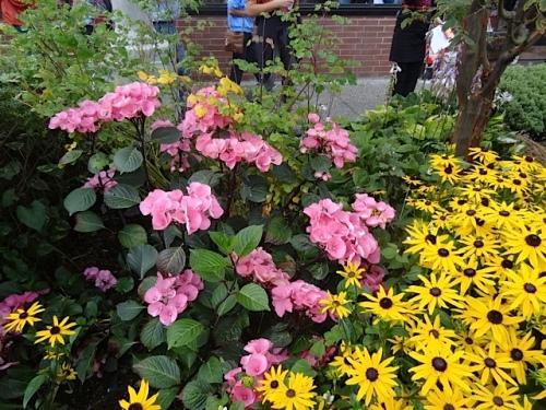 Hydrangea and rudbeckia