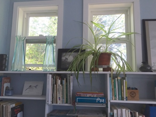 east windows over bookshelves