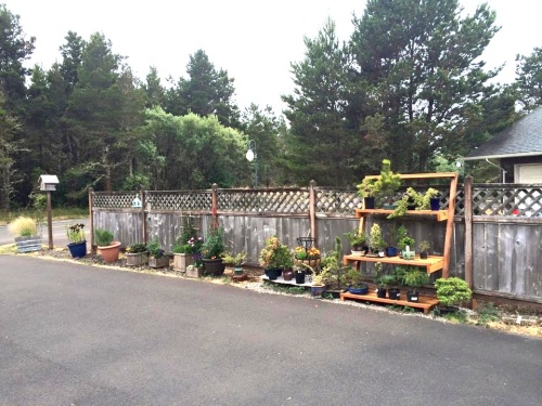 the driveway container garden