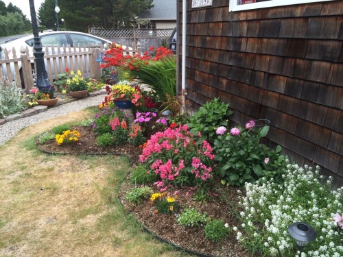what was a too-narrow straight edged bed along the house