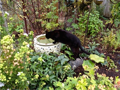 Allan's photo: Our neighbour, Onyx, comes for a drink.
