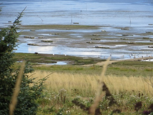 telephoto with oyster beds